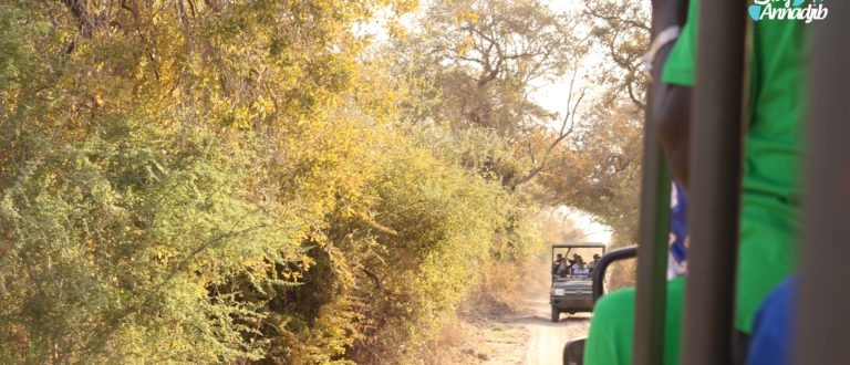 Article : Safari photo au parc national de Zakouma